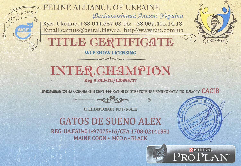 Титульный сертификат «Inter.Champion»