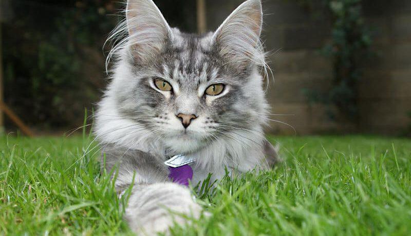 Имя для кота