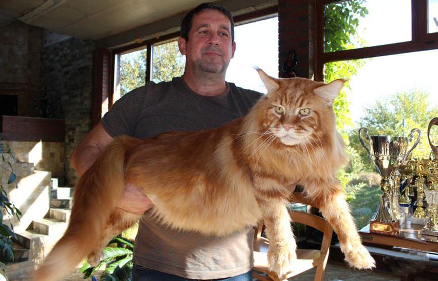 украинский кот Кекс из Днепра