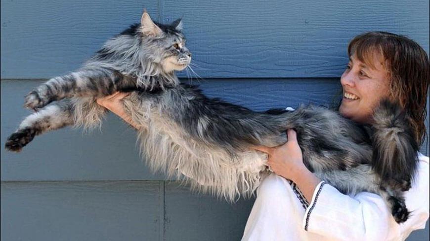 кот Стьюи из Невады