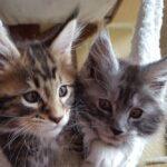 Котята из питомника стоят дорого